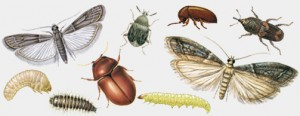 Insect Gallery